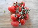 Klicke auf die Grafik für eine größere Ansicht  Name:tomatenstengel-roma-rispentomaten.jpg Hits:63 Größe:191,4 KB ID:27