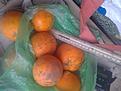 Klicke auf die Grafik für eine größere Ansicht  Name:Orangen_schorfig.jpg Hits:13 Größe:875,0 KB ID:3693