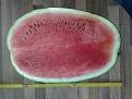 Klicke auf die Grafik für eine größere Ansicht  Name:griechische-wassermelone-halb.jpg Hits:42 Größe:202,7 KB ID:118