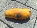 Klicke auf die Grafik für eine größere Ansicht  Name:mango-vergammelt2.jpg Hits:34 Größe:215,8 KB ID:122