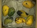 Klicke auf die Grafik für eine größere Ansicht  Name:mango-tropenkost-lieferung-vergammelt.jpg Hits:44 Größe:203,3 KB ID:124