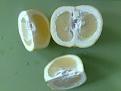 Klicke auf die Grafik für eine größere Ansicht  Name:weisse-grapefruits.jpg Hits:42 Größe:202,7 KB ID:98